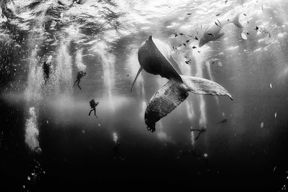 The 25 Most Impressive Photos From National Geographic 2015